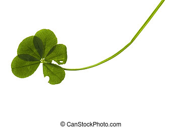 Five Leaf Clover Isolated On The White Background Stock Photos