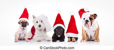 five little dogs wearing santa claus hats