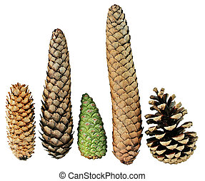 Five Pine Cones - Set of five pine cones isolated on white...