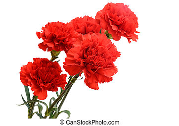 Five red carnations - Bouquet of five red carnations...