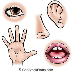 Five Senses - A science education illustration of icons ...