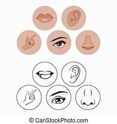 five senses, - five senses, nose lips eye ear and hand