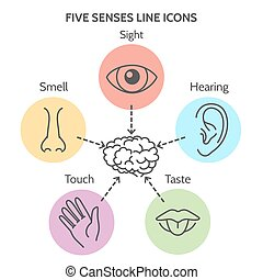 Five senses line icons. Human ear and eye symbols, nose and...