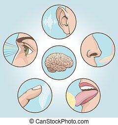 Five senses set - Vector illustration. A set of six images.