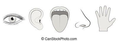 Five Senses Sight Hearing Taste Smell Touch - Five senses -...