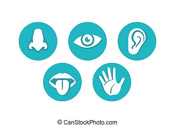 Five senses - touch, sight, hearing, smell, taste