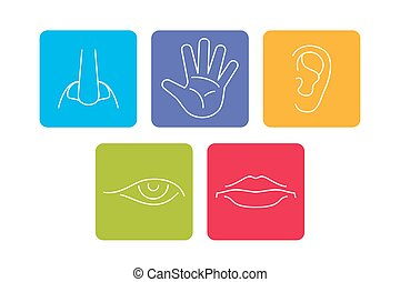 Five senses vector icons set isolated white. Smell and see,...