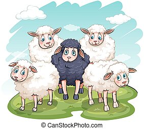 Five sheeps on a white background