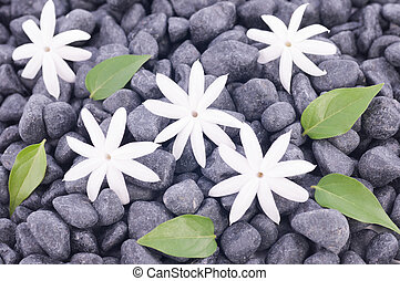 Five white jasmine flowers and leaves over zen stone background
