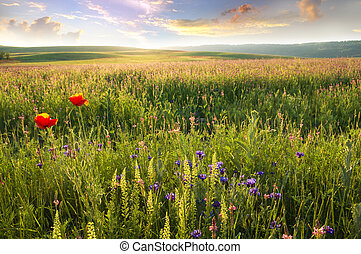fjäder, äng, flower., violett