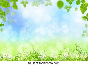 fjäder, äng, med, grönt lämnar
