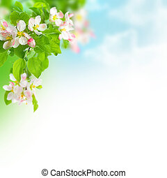 fjäder, äpple, blomstringar, gräns