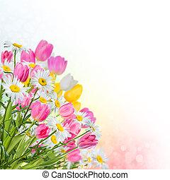 fjäder, bakgrund, med, blomningen