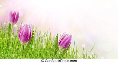 fjäder, bakgrund, med, blomningen, och, gräs