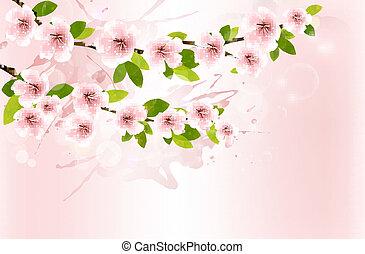 fjäder, bakgrund, med, blomstrande, sakura, branches., vektor, illustration.