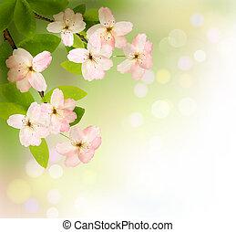 fjäder, bakgrund, med, blomstrande, träd, brunch, med, fjäder, flowers., vektor, illustration.