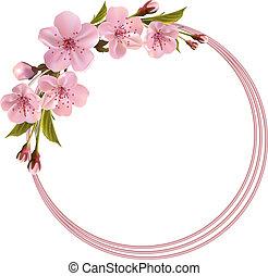 fjäder, bakgrund, med, rosa, körsbär, blomningen