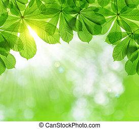 fjäder, bladen, av, kastanj träd