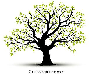 fjäder, bladen, vektor, -, träd