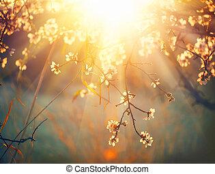 fjäder, blomma, bakgrund., vacker, beskaffenhet scen, med, blomning, träd