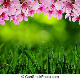 fjäder, blomma, med, mjuk, fläck, bakgrund