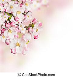fjäder, blomstringar, vita, bakgrund