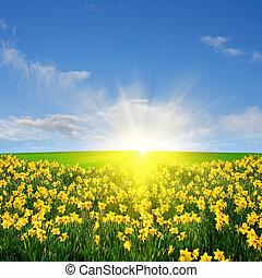 fjäder, fält, och, sol
