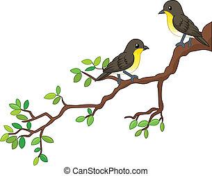 fjäder, fåglar, två, filial, sång