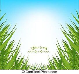 fjäder, frisk, gräs, bakgrund