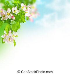 fjäder, gräns, äpple, blomstringar