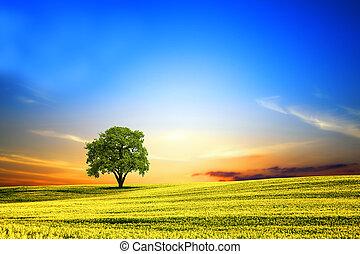 fjäder, landskap, hos, solnedgång