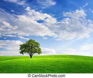 fjäder, landskap, med, oaktree, och blåa, sky