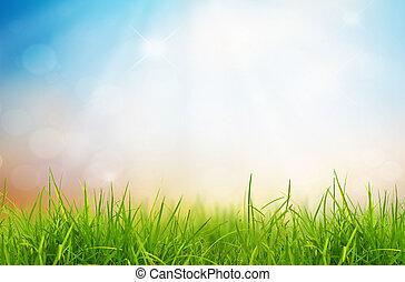 fjäder, natur, bakgrund, med, gräs, och blåa, sky, i...