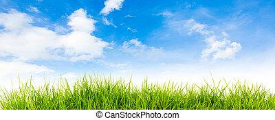 fjäder, natur, bakgrund, med, gräs, och blåa, sky, i baksidaen, sommartid