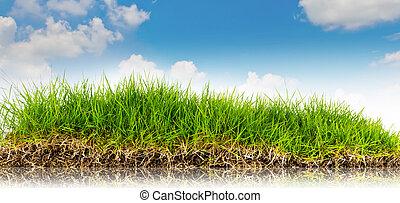 fjäder, natur, bakgrund, med, gräs, och blåa, sky, i baksidaen, .summer, tid