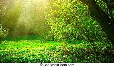 fjäder, parkera, med, grönt gräs, och, träd., vacker, beskaffenhet landskap