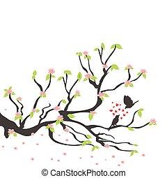 fjäder, plommon träd, fåglar, älskande
