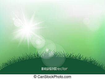 fjäder, solsken, gräs, lätt
