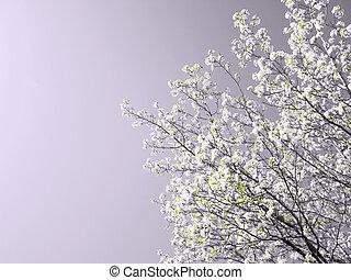 fjäder, träd, i blomster