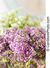 fjäder, violett, lila, blomningen, abstrakt, mjuk, blommig, bakgrund.