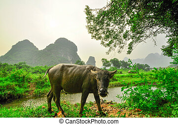 fjäll,  yangshuo,  Guilin, Läsida, flod, landskap