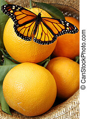 fjäril, apelsiner