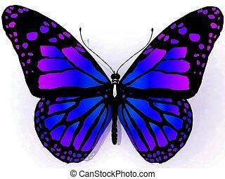 fjäril, baksida, isolerat, vit
