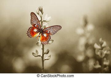 fjäril, fält, röd, lynnig
