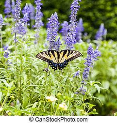 fjäril, in, den, grön, natur