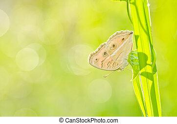 fjäril, in, grön, natur