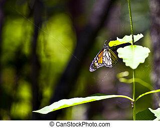 fjäril, in, natur