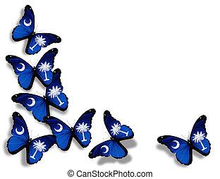 fjärilar, isolerat, flagga, bakgrund, vit, södra carolina