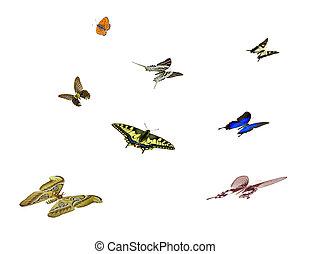 fjärilar, isolerat, vita, bakgrund