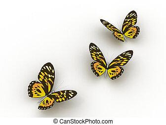 fjärilar, isolerat, vita